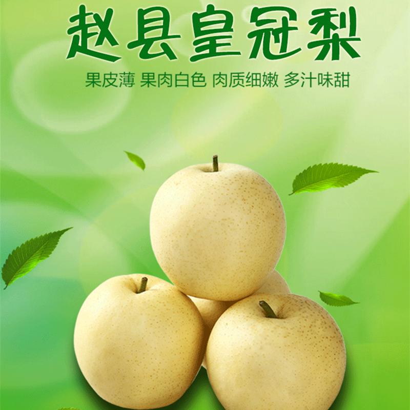 金翡翠  新鲜水果皇冠梨 原产地现摘直发梨子黄冠梨